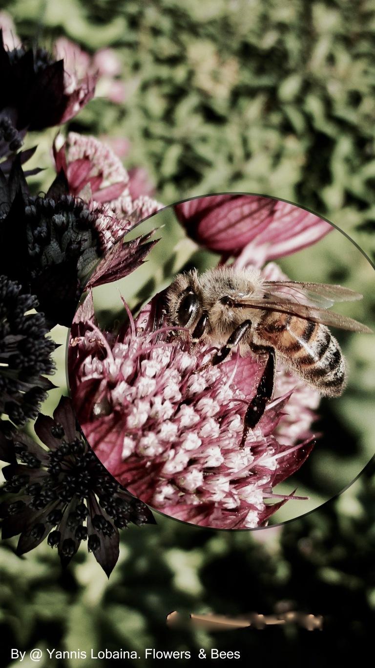 Flower & Bees